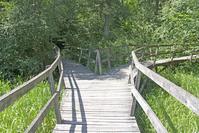 Woodland Trail 5