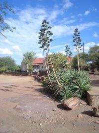 Aloes at the School at Mochudi