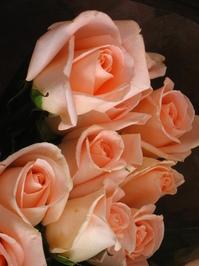 Roses roses roses! 3