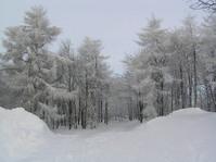 snow paradise2