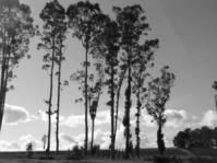 Sonoma area 1