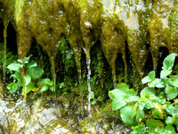 Water in mud