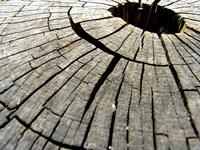 Dead-wood tree 17