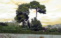 Tree & funny sky