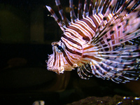 Hectic Tropical Fish