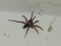 arachnophobia 1