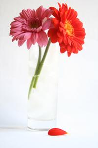 Flower Series:. 10