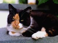 "The cat ""Humlan"