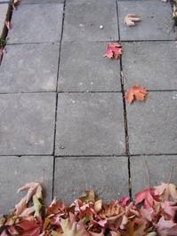 Autumn leaves on patio