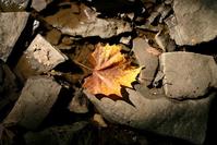 creek leaf