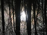Floodplain woods