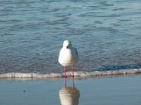 Seagull Alone 2