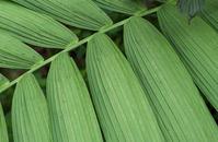 Tropical Flora/Plants 2