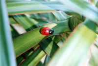 Ladybug & Plant