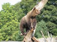 Bears In Free