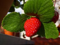 Macro Strawberry 4