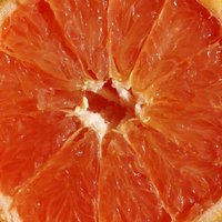 fruit macro