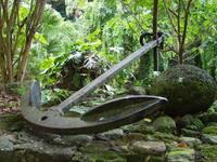 jungle anchor