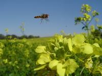 Bee's Flyin