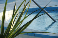 Pool Plant View