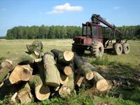Logging at a farm in Lincolnshire