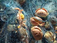 crabs_thai