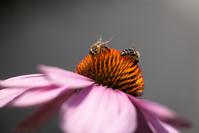 macro_flower_bee_ 2