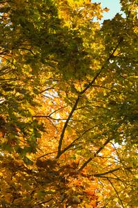 orange leafs