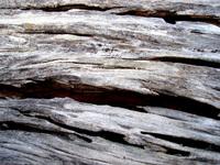 rotten wood 21