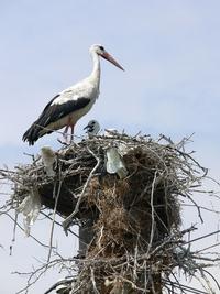 stork family 1