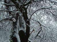 Black and White winter