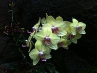 Moody Garden Orchids 2