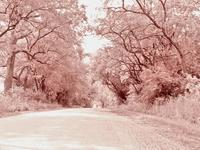 Garfield Road