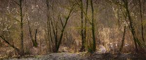 Spooky Forest in Winter