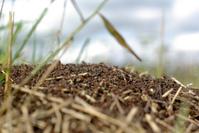 ant nest 1