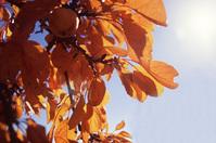 Autumn Leaves (red/orange)