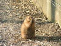 Small fellow