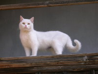 My cat - ROZI