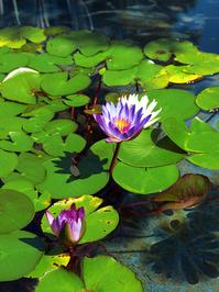 Peaceful Pond 2