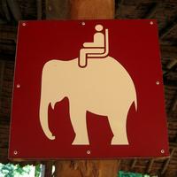 Elephant Rides Here