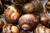 snail texture