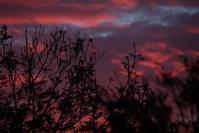 Purple Evening sky through trees