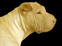 My dog, Aspen