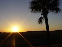 palm tree sun