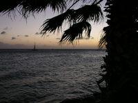 Aruba Palm Sunset