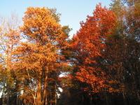 Autumn in Poland... 2005