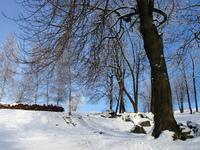 winter landscape 02