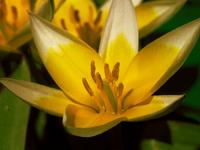 Flower ' 2