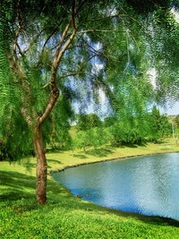 Vivid Nature