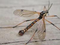 Bugs in the garden 2